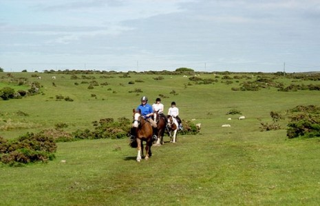 Riding horses across Dartmoor